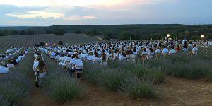 festival-lavanda-brihuega-82-a