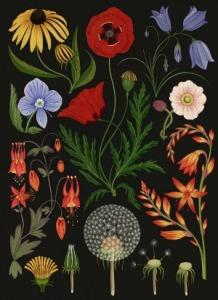 ilustracion-botanica-katie-scott