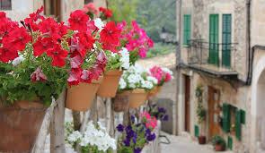 valldemossa flores
