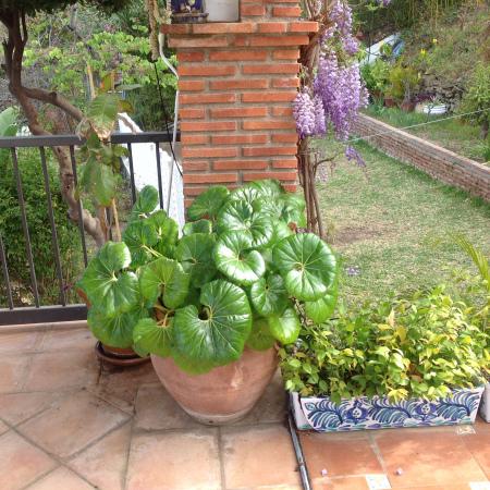 Plantas familiares (II)  Las plantas del abuelo Pepe y la abuela ... 3993e9da363