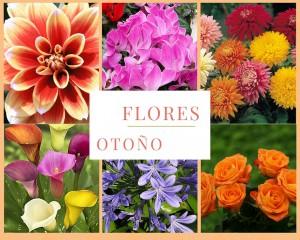 flores-otono-300x240