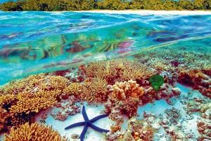 la-gran-barrera-de-coral-australia-600x400
