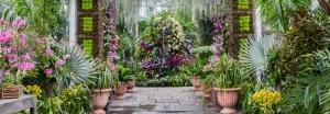 orchidelirium-orquideas-jardin-botanico-new-york-9