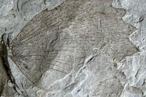 fosiles-univ-zaragoza-y-efe-600x400