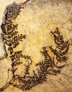 fosilesdeflores1