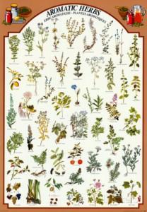 aromatic-herbs