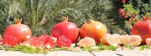 granada-carmela-2