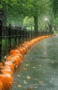lluvia-calabazas