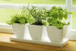 plantas-aromaticas-830x555