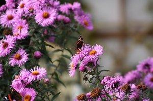 flores-y-mariposas_950