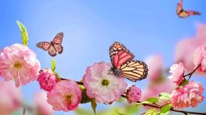 mariposas-y-flores-rosadas-1920x1080