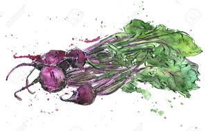 Beets, drawing by ink and watercolor with paint stains, hand drawn vegetables, vintage design elements, hand drawn vintage artistic painting illustration