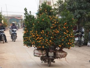 kumquat_road__january