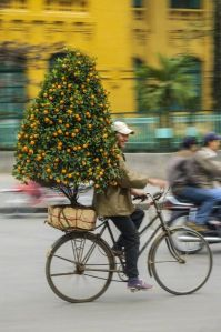 01 Feb 2005 --- A young man delivers a dwarf orange tree as part of the Chinese New Year celebrations in Hanoi the capital of Vietnam. No Model Release --- Image by © Ron Watts/Corbis