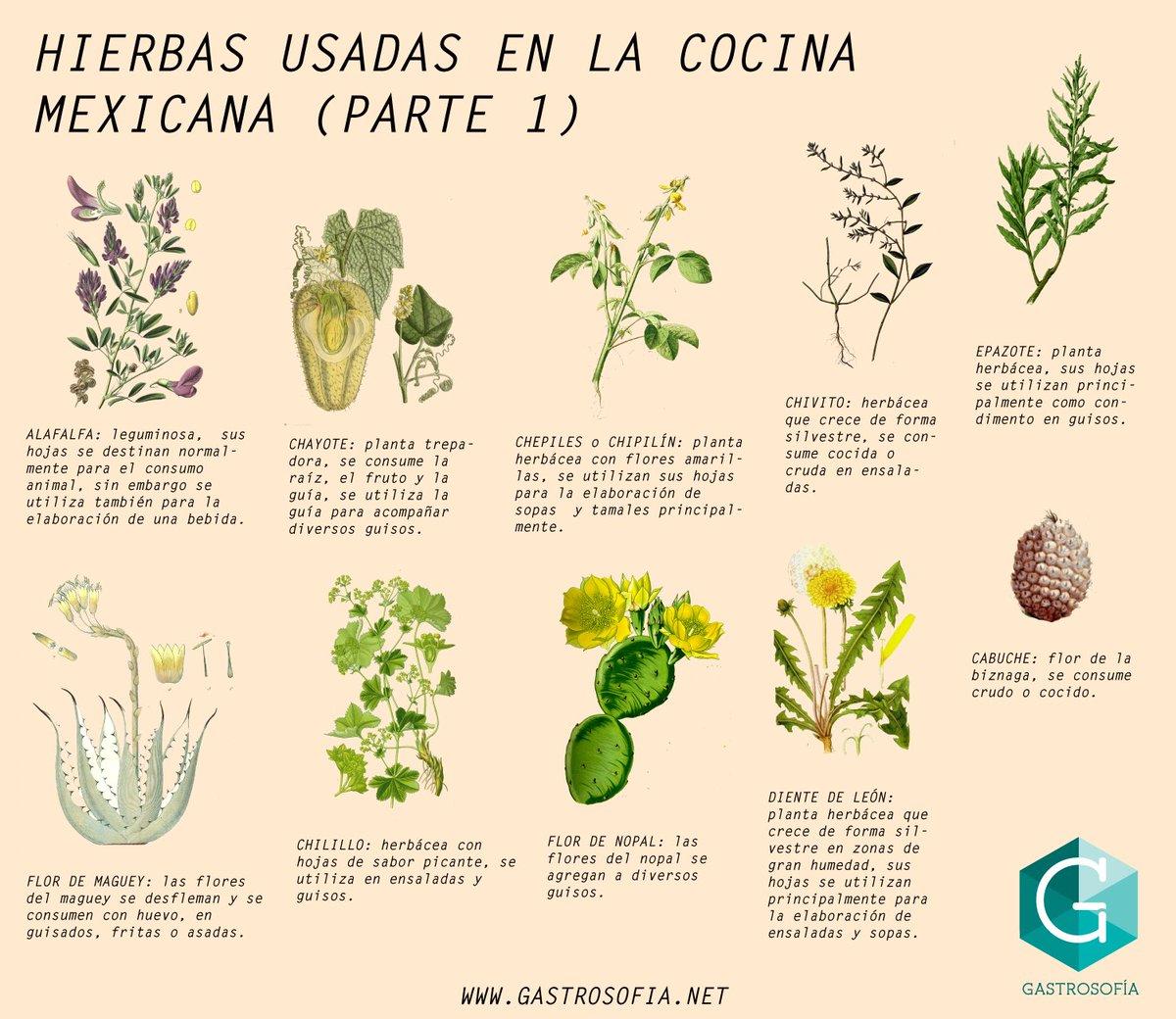 flores  u00e1rboles y plantas  u2013 creciendoentreflores